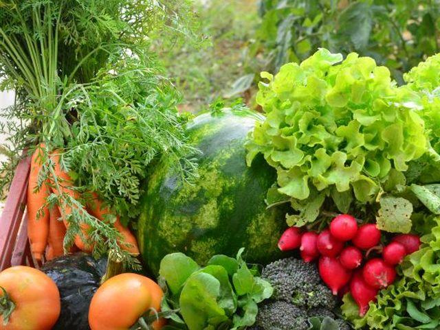 SC sanciona lei que incentiva a produção de alimentos orgânicos