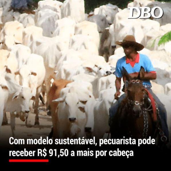 Com modelo sustentável, pecuarista pode receber R$ 91,50 a mais por cabeça
